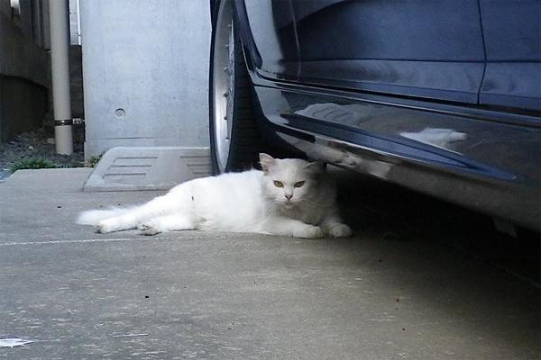 プリちゃん珍しく車の下