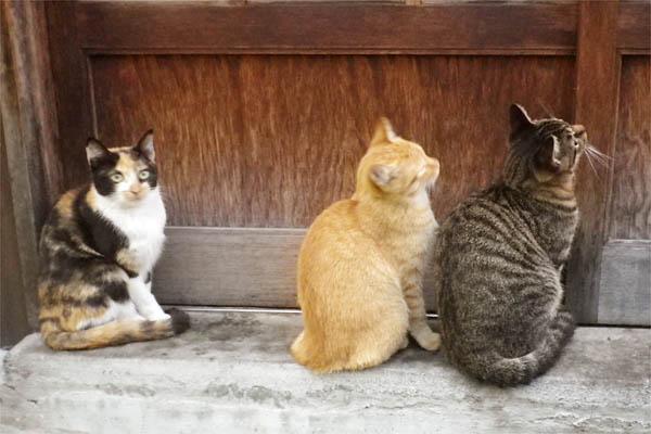 開けておくれと見つめる猫