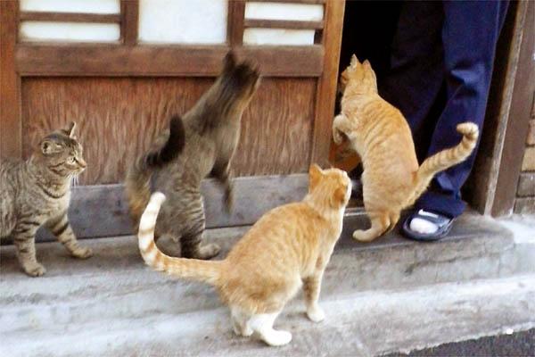 店の中に入って遊ぶつもりの猫達