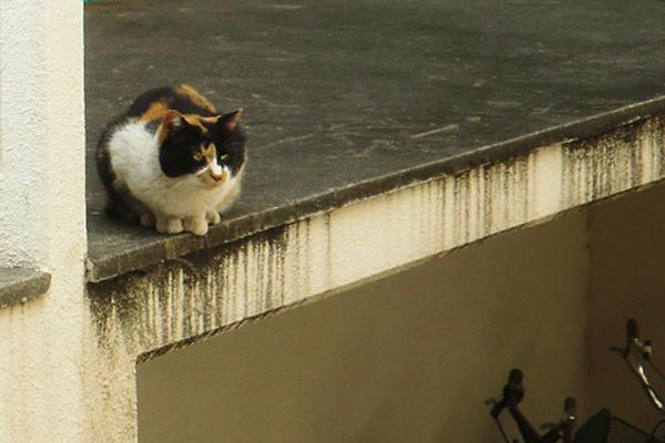三毛猫さん斜めから