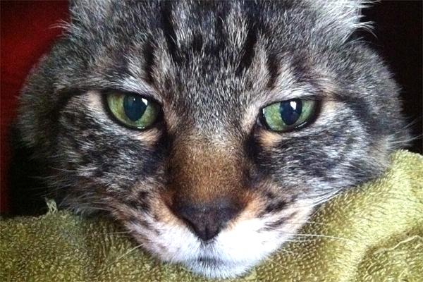 断食する猫みぃ