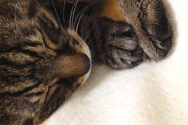 眠るみぃと爪