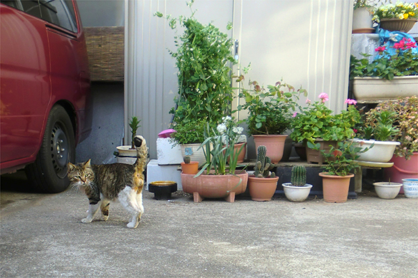 レオ君と鉢花