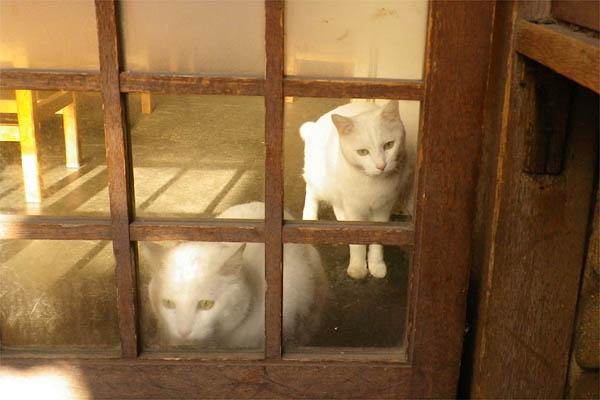 居酒屋白猫カップル1
