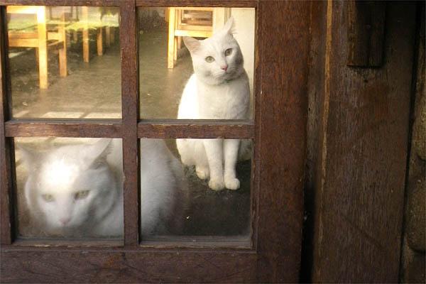 居酒屋白猫女の子かわいい