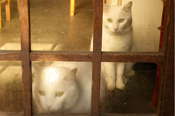 居酒屋白猫カップル2