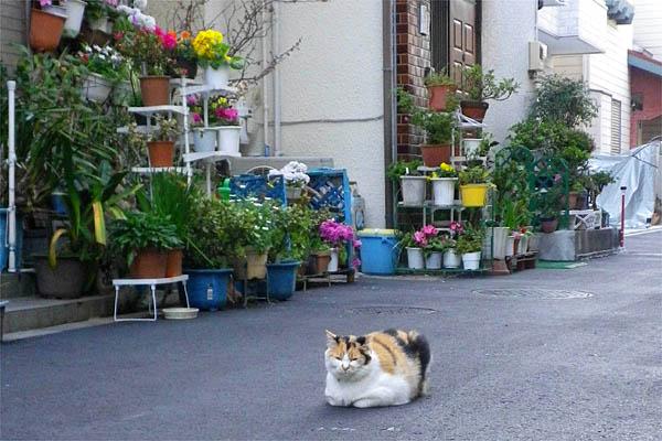 モモちゃんと鉢花
