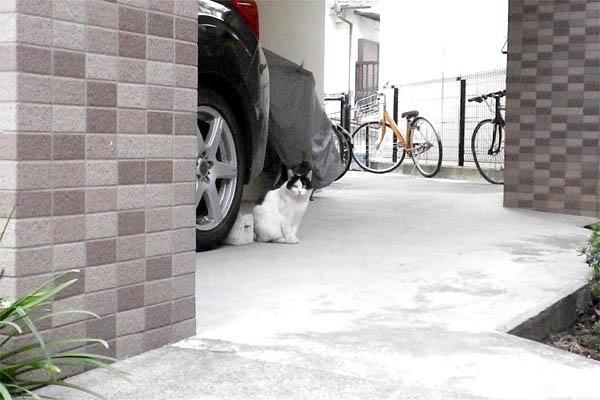 小雪駐車場