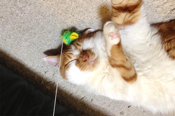 おもちゃと寝るモン