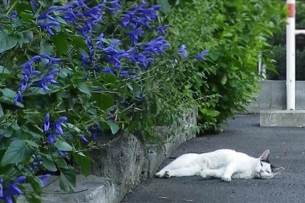 テンと青い花