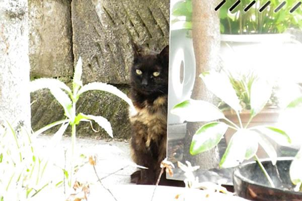 お顔だけ黒猫さん