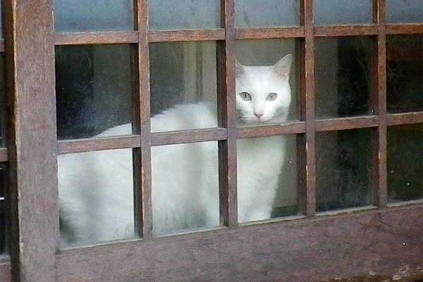 美猫白ちゃん