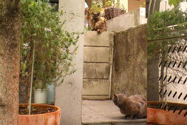 サビ猫とロシ君