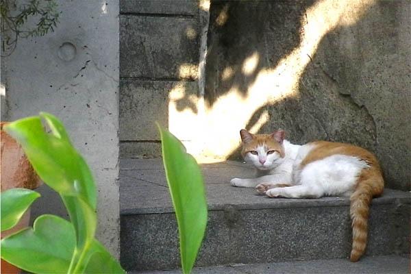 茶白日猫と葉っぱと木漏れ日