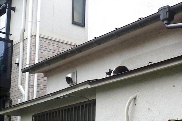 屋根の上のスズ