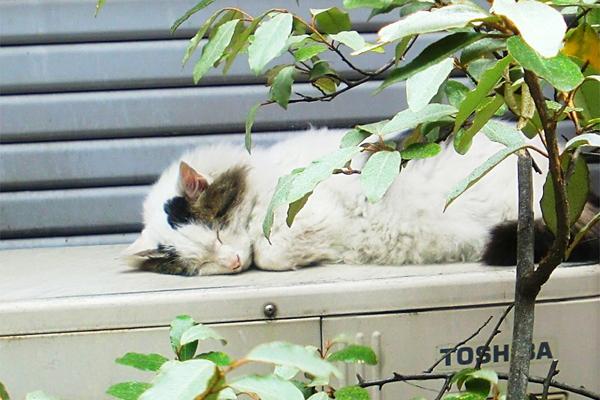 室外機の上で眠るラン