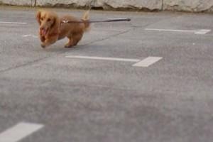 モモ走る2