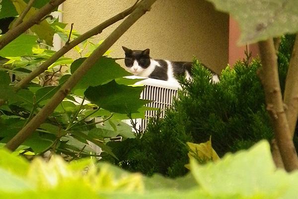葉っぱから寝てるニコ