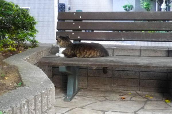 ベンチで待つマリィ