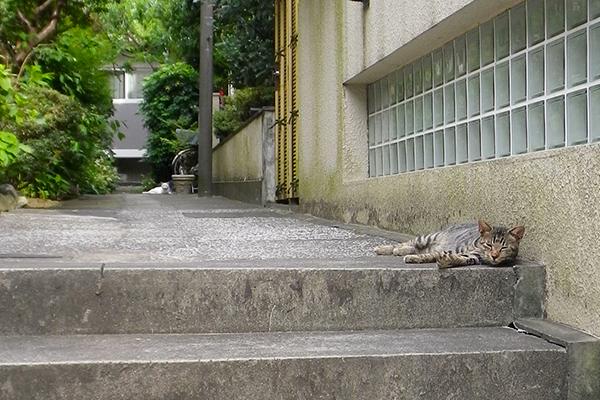 階段の端っこにタビワン