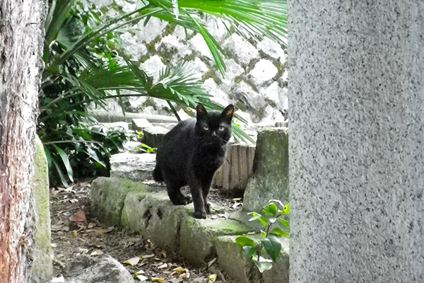unknown blackcat