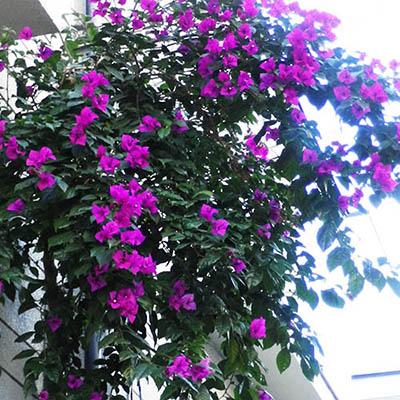 クルミの近くに咲く花