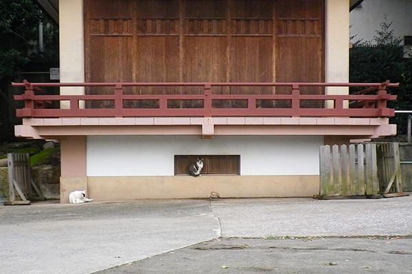 神社雫とヤコ