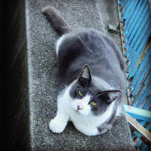 神社猫リン