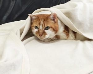 毛布もんち