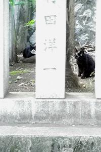 神社カラとナクゥ