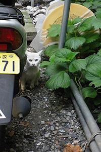 居酒屋の白猫君