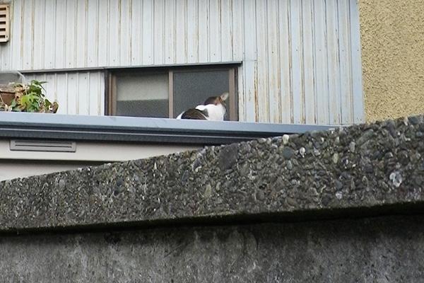 一期一会屋根の上のねこ背中