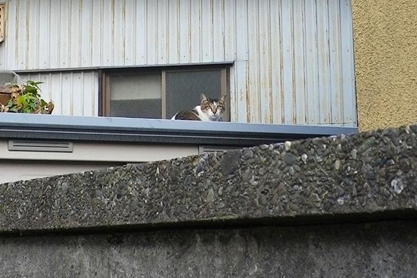 一期一会屋根の上のねこ振り向く