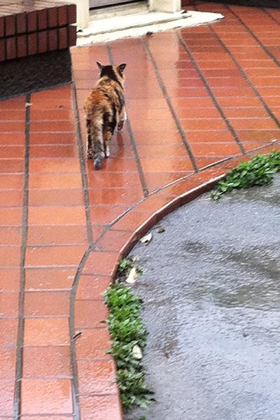 去る三毛猫さん