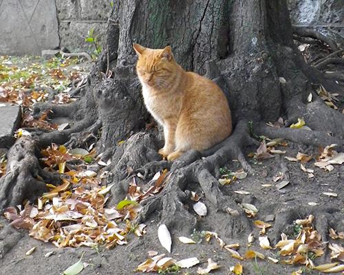 神社猫ナチャと木の根っこ