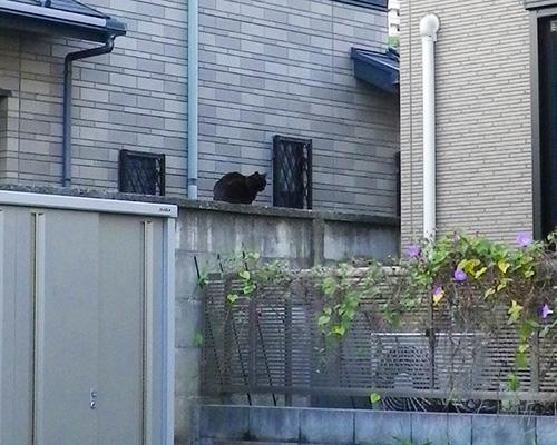 遠くに黒猫さん