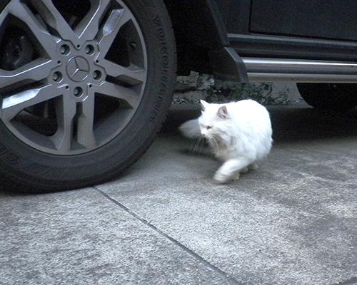 車の下をくるりんライ