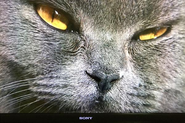 岩合さん世界猫歩きアズール