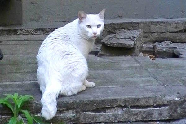 白猫君振り向きの図