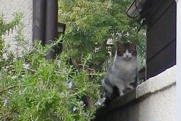工場の塀に猫3