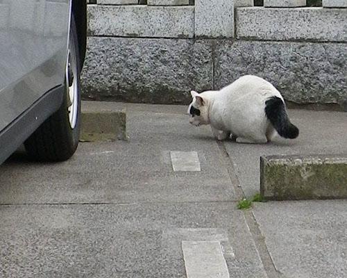 車の下を覗くヤコ