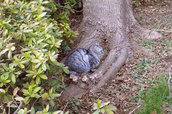 木の根元に落ち着くシルバ