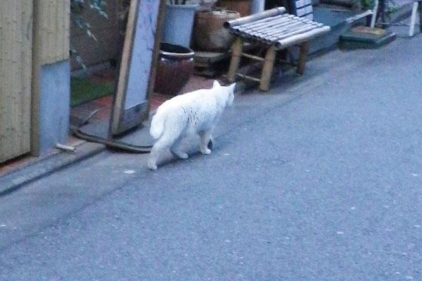 居酒屋白猫君
