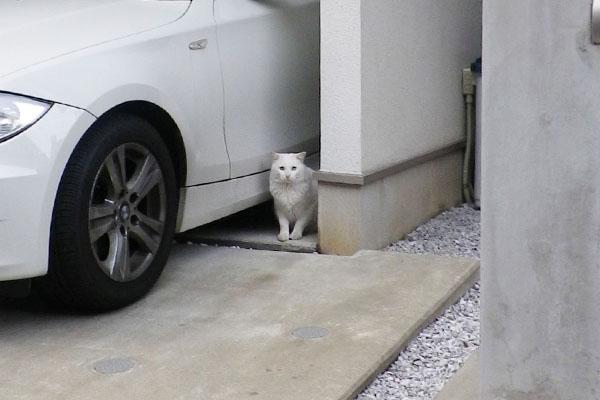 白猫君正面