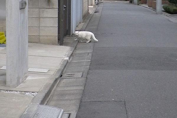 白猫君別の家へ