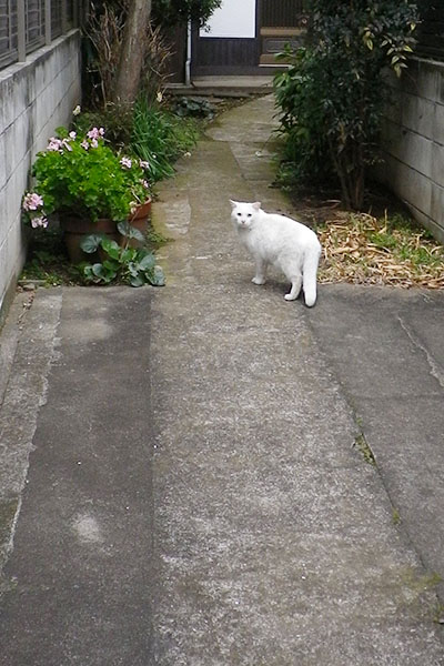 白猫君ロード1