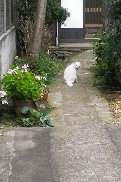 白猫君ラスト