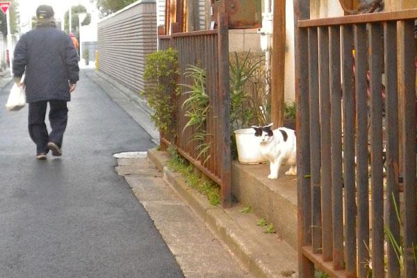 玄関に猫さん