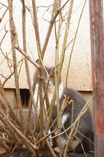 peepingcat