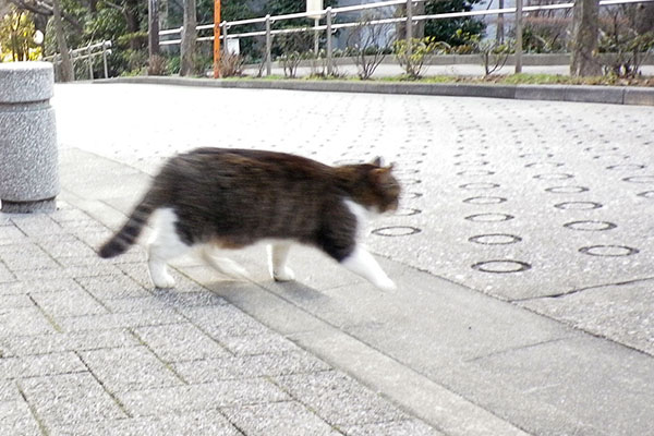 走るマリィ
